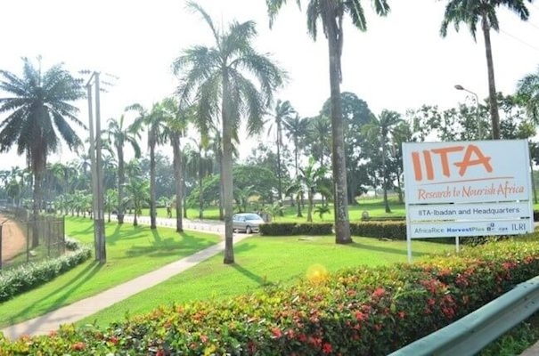 IITA Recruitment Portal